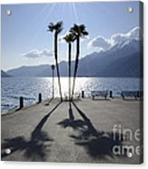Palm Trees With Shadows Acrylic Print