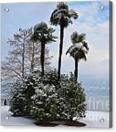 Palm Trees With Snow Acrylic Print