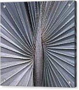 Palmetto Fan Acrylic Print