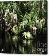 Palmettoes In The River Acrylic Print