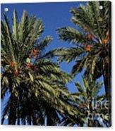 Palms 9838b Acrylic Print