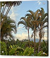 Palms In Costa Rica Acrylic Print