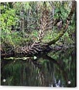 Palms On The River Acrylic Print