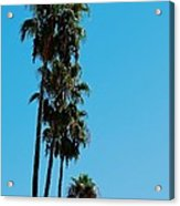 Palms Over Oak Acrylic Print