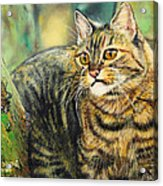Palo Verde Kitty Acrylic Print