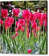 Panel Of Pink Tulips Acrylic Print