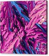 Pangamic Acid Crystal Acrylic Print