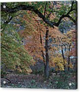 Panorama Of Fall Colors At Lost Maples Acrylic Print