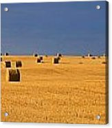 Panoramic Of A Straw Field, Near Val Acrylic Print