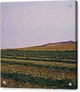 Panoramic View Of An Alfalfa Field Acrylic Print