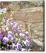 Pansies And Pussywillows Acrylic Print