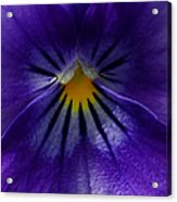 Pansy Abstract Acrylic Print