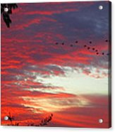 Papaya Colored Sunset With Geese Acrylic Print