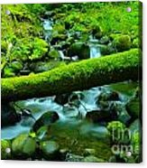 Paradise Of Mossy Logs And Slow Water   Acrylic Print
