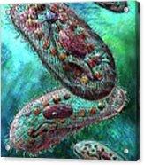 Paramecium Acrylic Print