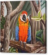 Parrot At New Orleans Zoo Acrylic Print