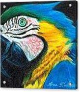 Parrot Miniature Acrylic Print