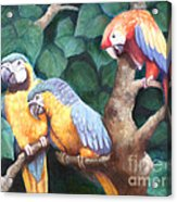 Parrot Painting Acrylic Print