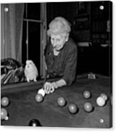 Parrots And Snooker Acrylic Print by Reg Speller