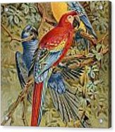 Parrots: Macaws, 19th Cent Acrylic Print