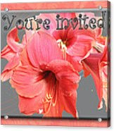 Party Invitation - Amaryllis Flowers Acrylic Print