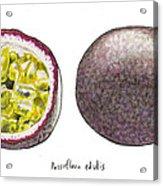 Passiflora Edulis Fruit Acrylic Print