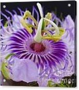 Passion Flora Acrylic Print by Juergen Roth