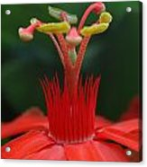 Passion Flower Crown Acrylic Print