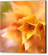 Passion For Flowers. Orange Delight Acrylic Print