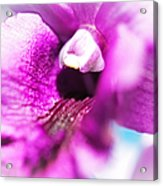 Passion For Flowers. Orchid Close Up Acrylic Print