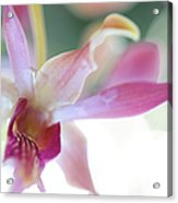 Passion For Flowers. Sensualite Acrylic Print