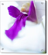Passion For Flowers. Sweet Kiss Acrylic Print