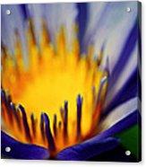 Passion Is Energy Acrylic Print