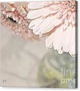 Passionly  Pink Acrylic Print