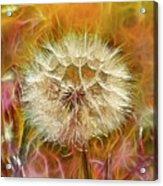 Pastel Dandelion Flare Acrylic Print