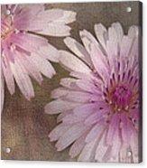 Pastel Pink Passion Acrylic Print
