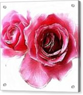 Pastel Roses Acrylic Print