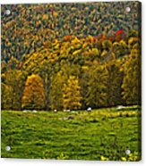 Pastoral Painted Acrylic Print