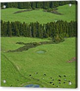 Pastures In Azores Islands Acrylic Print