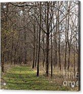 Path Of The Trees Acrylic Print