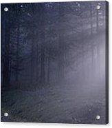 Path Through A Misty Forest Acrylic Print