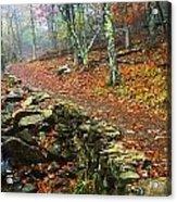 Path Through Forest, Shenandoah Acrylic Print