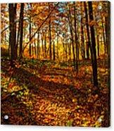 Paths Home Acrylic Print