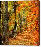 Pathway Through Autumn Woods Acrylic Print
