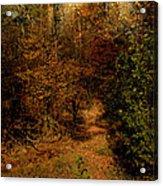 Pathways Acrylic Print