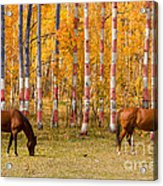 Patriotic Autumn Acrylic Print