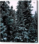 Pat's Winter Trees 1d Acrylic Print