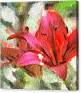 Patty's Perfect Lily Acrylic Print