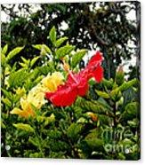 Paute Farm Flowers Acrylic Print