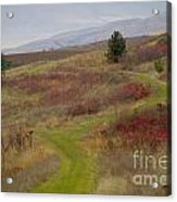 Paved In Green Acrylic Print by Idaho Scenic Images Linda Lantzy